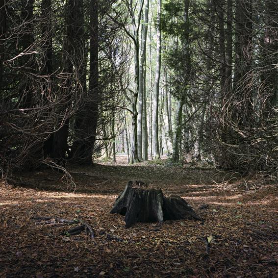 Forêt de Mormal 2016